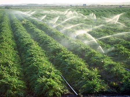 قطاع زراعی