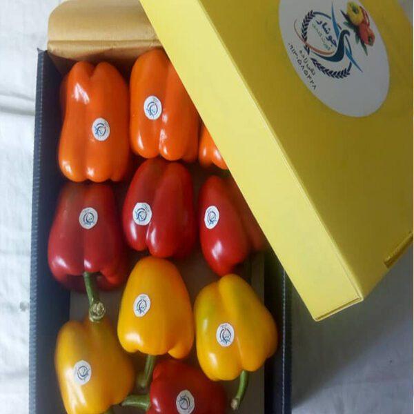 فلفل حلو-الفلفل الرومي - إنتاج الفلفل حلو جوشار في ايران موقع التجارة ويب - www.alttejarat.com