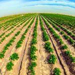 مشاريع العراق الزراعية موقع التجارة ويب www.alttejarat.com