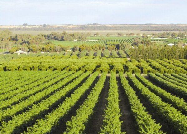 وزير الزراعة العراقي يرحّب بالاستثمارات الايرانية في القطاع الزراعي العراقي www.alttejarat.com موقع التجارة ويب